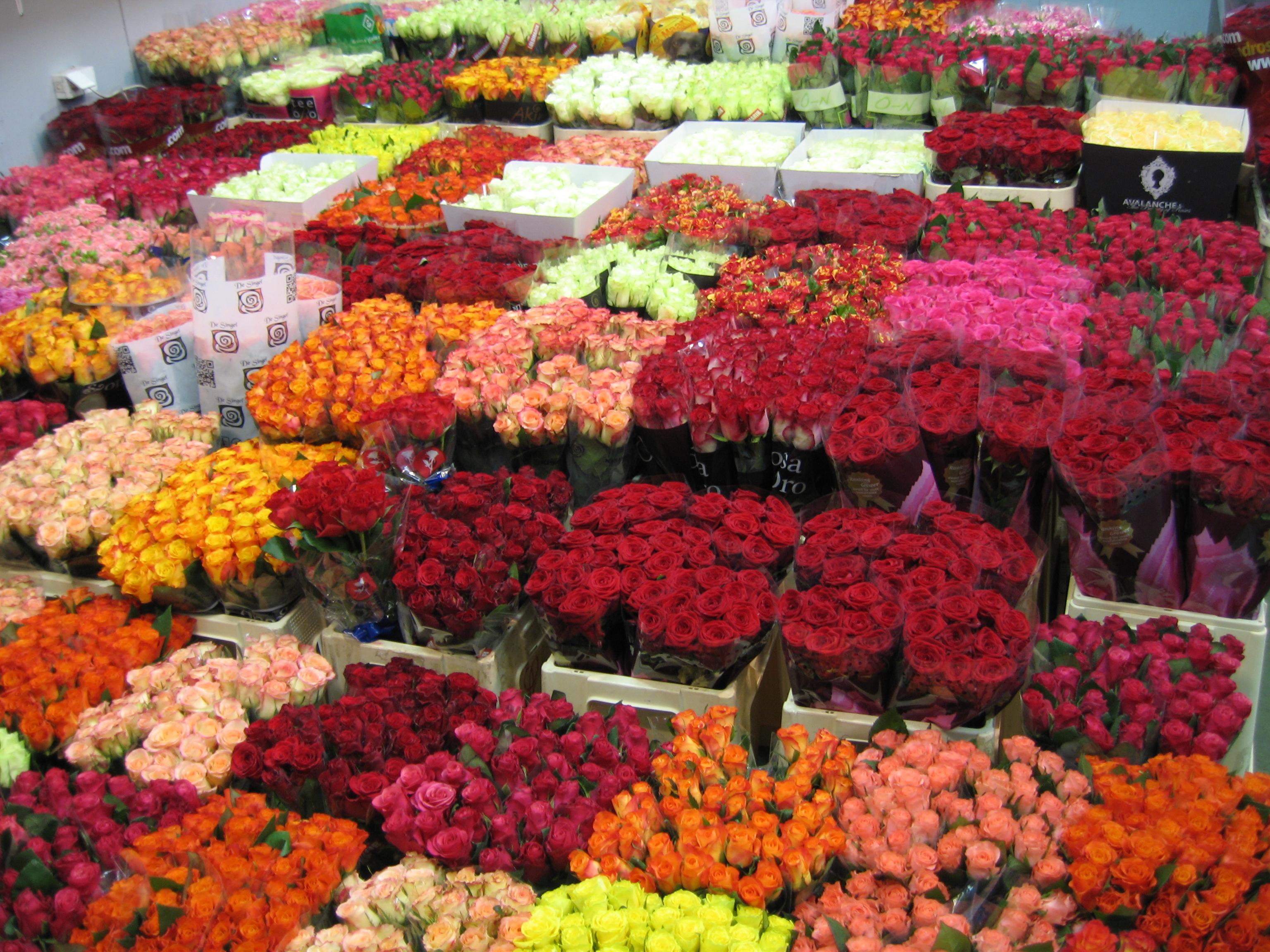 Оптовая база срезанных цветов г. москва, оптом спб